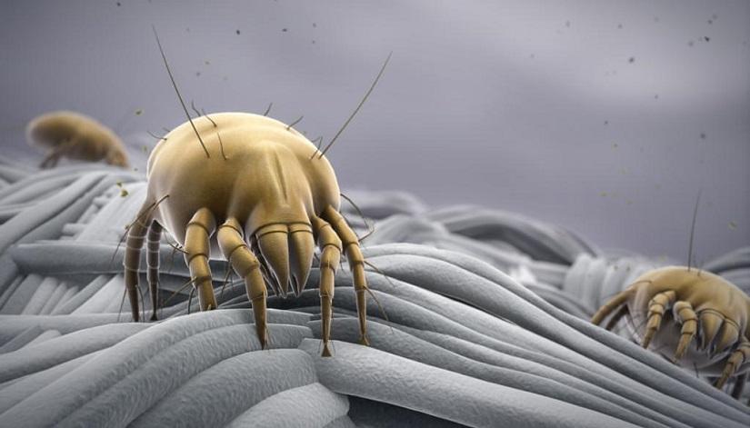 Как бороться с пылевым клещом